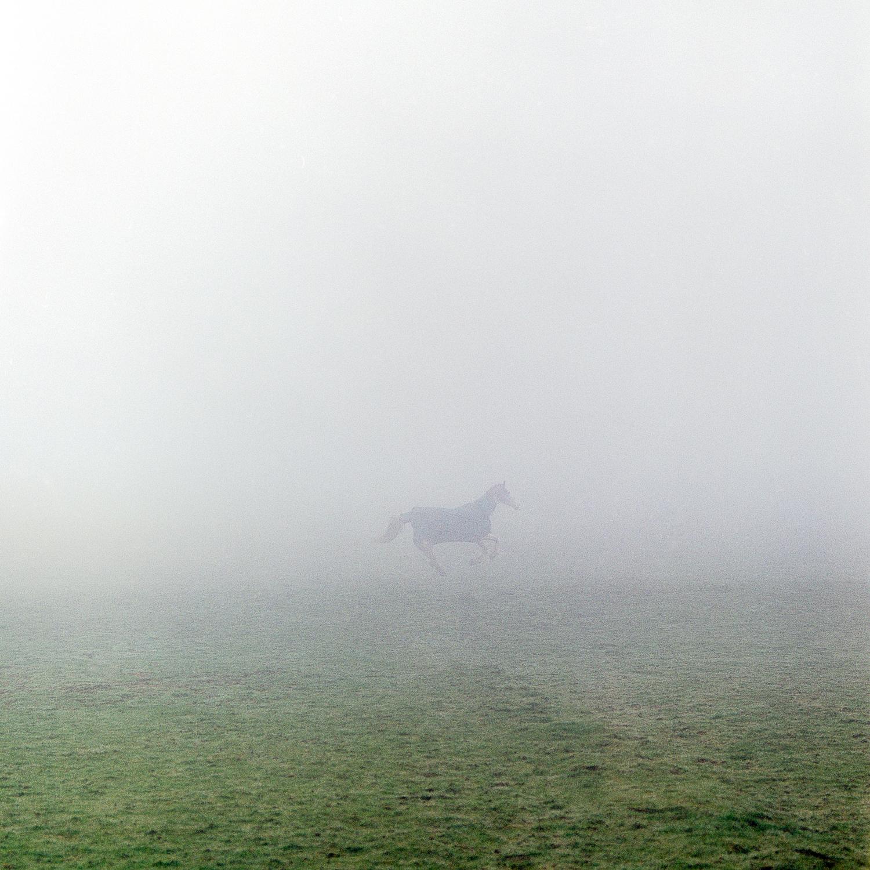 """""""HorseinFog"""" by Mark Hillyer"""
