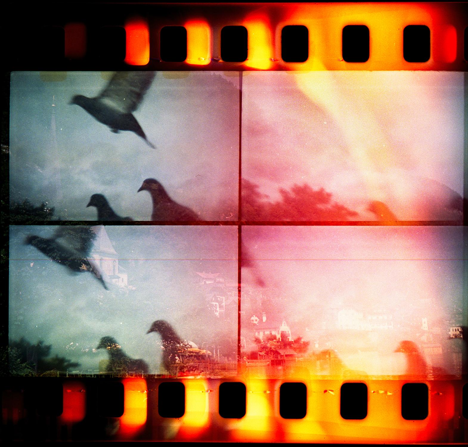 """""""Fire Bird"""" by Mark Tamer"""