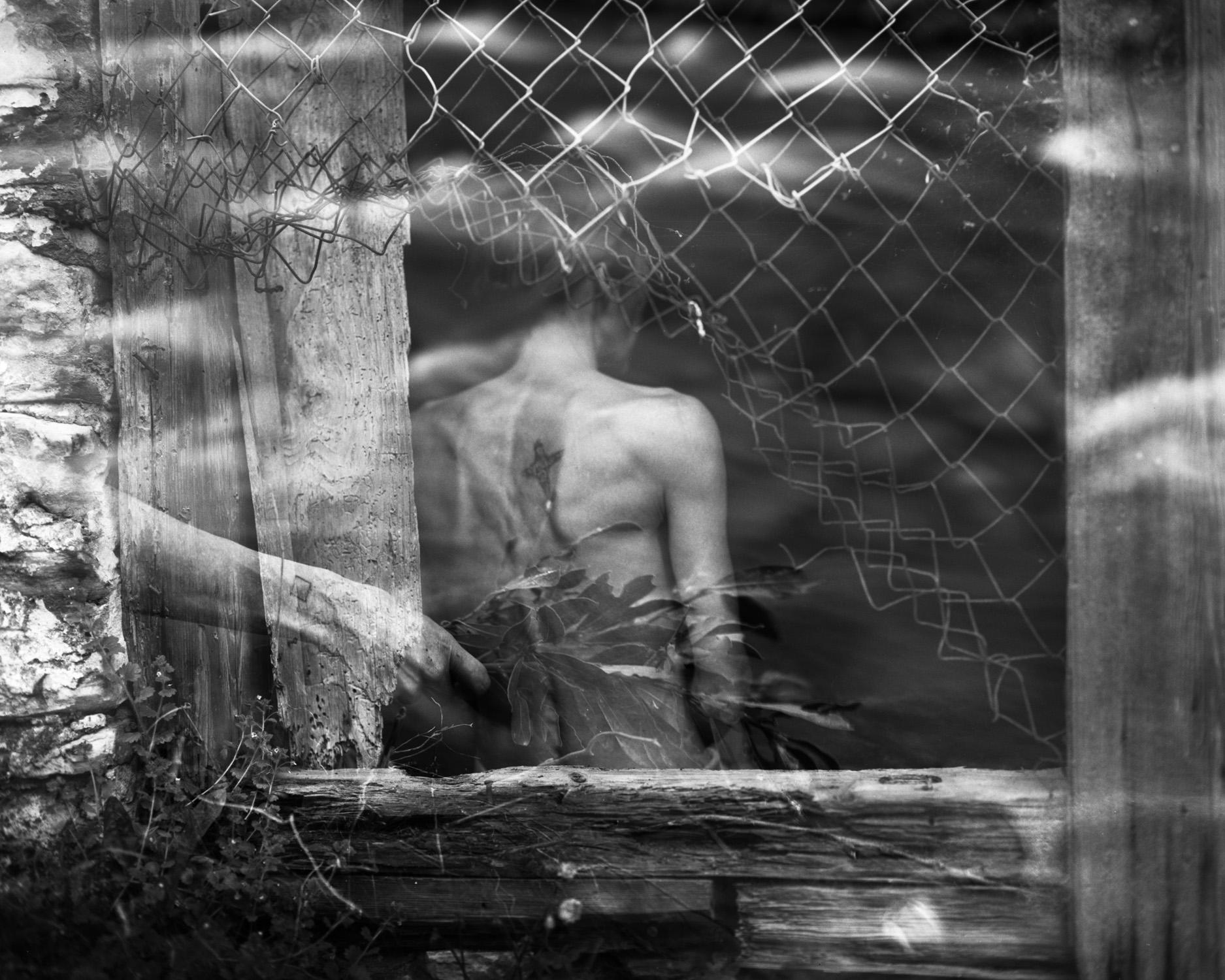 """Daphne"" by Alek Lindus"