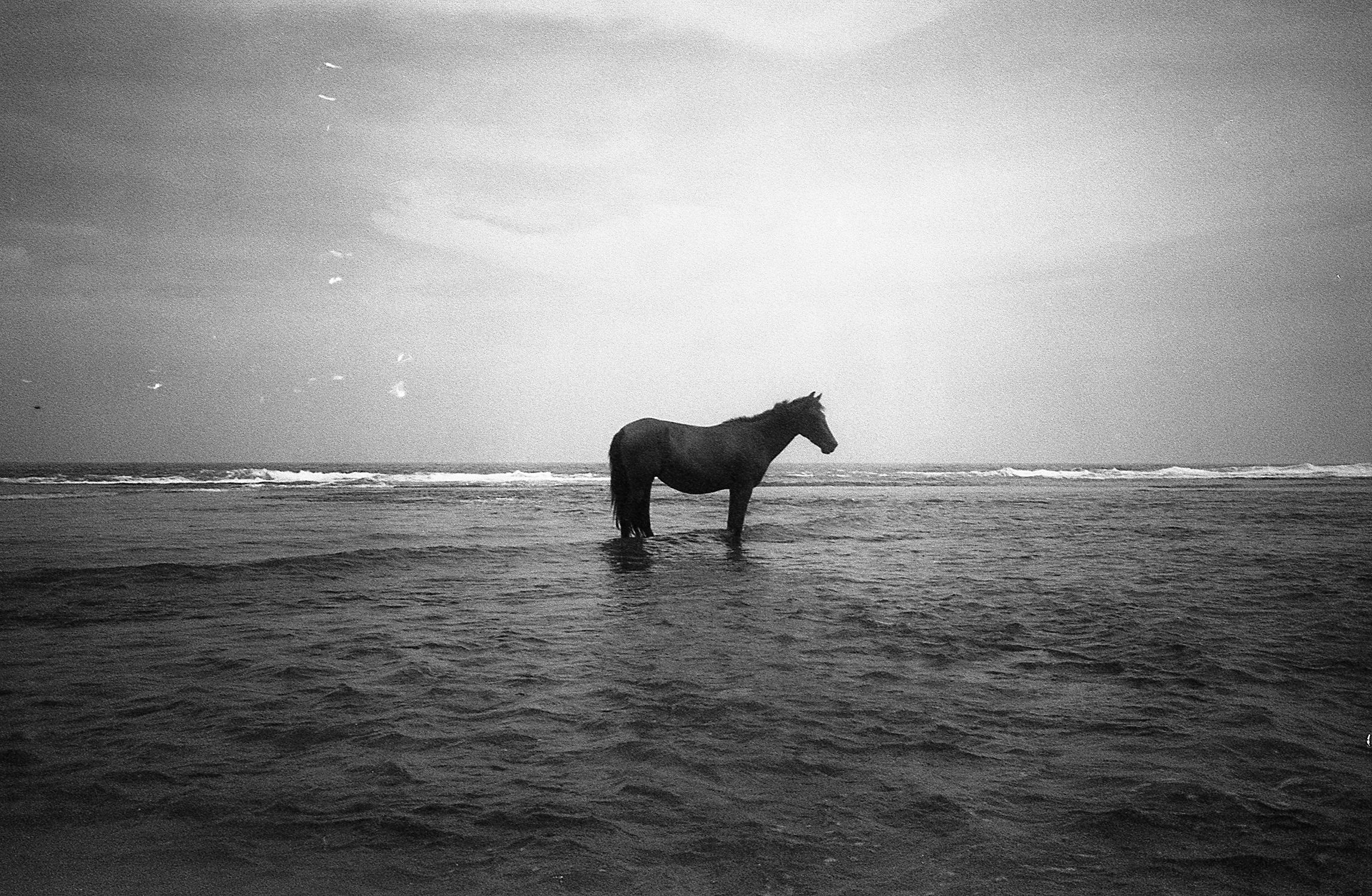 """WaterCreature"" by Faisal Tisnés"