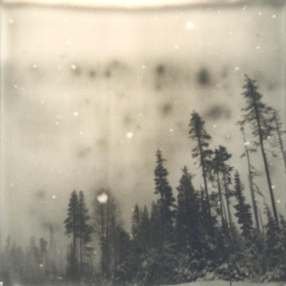 """Snow #3"" by Sharon Alagna"