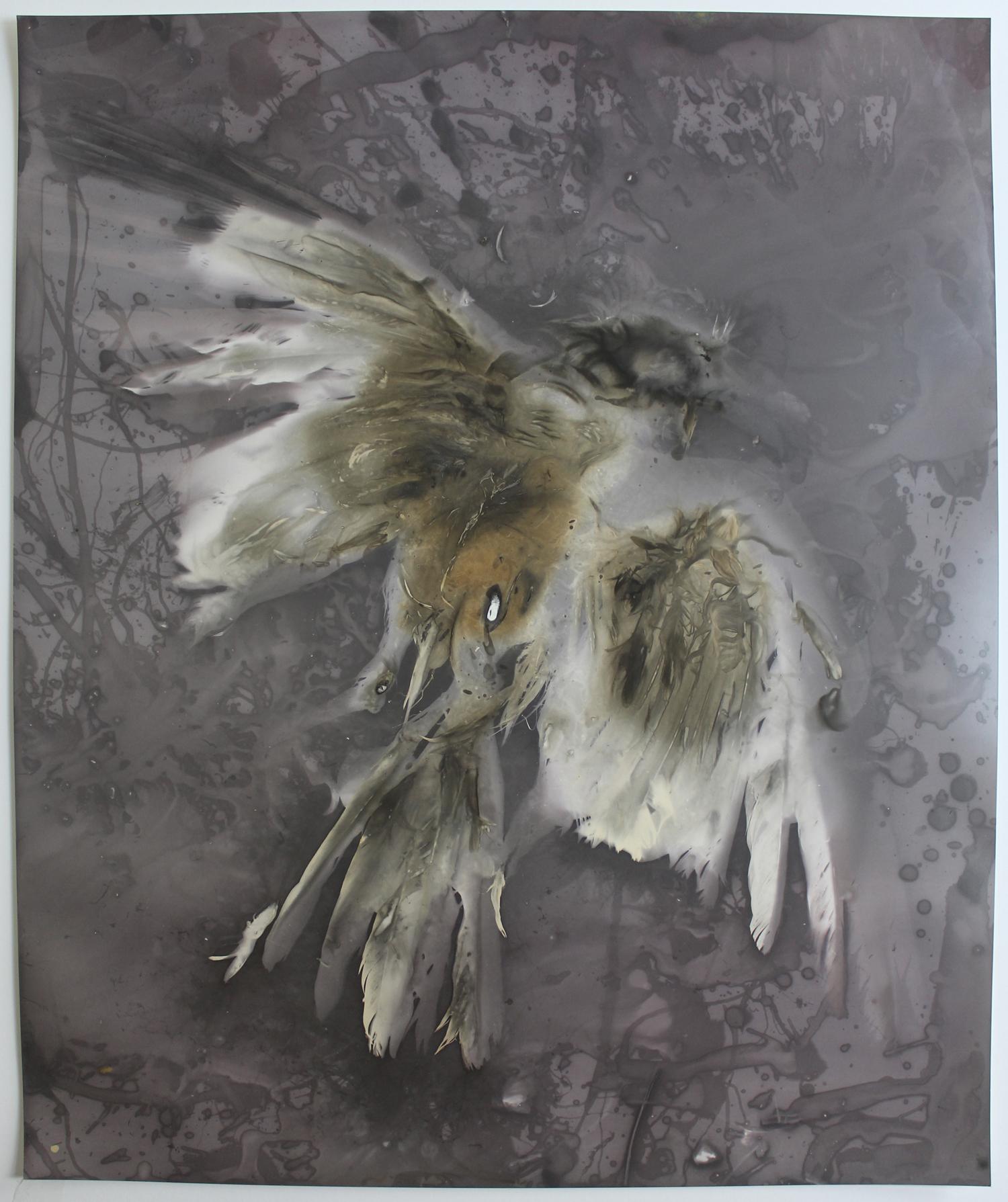 """""""The Fugacious Crow II"""" by Ky Lewis"""