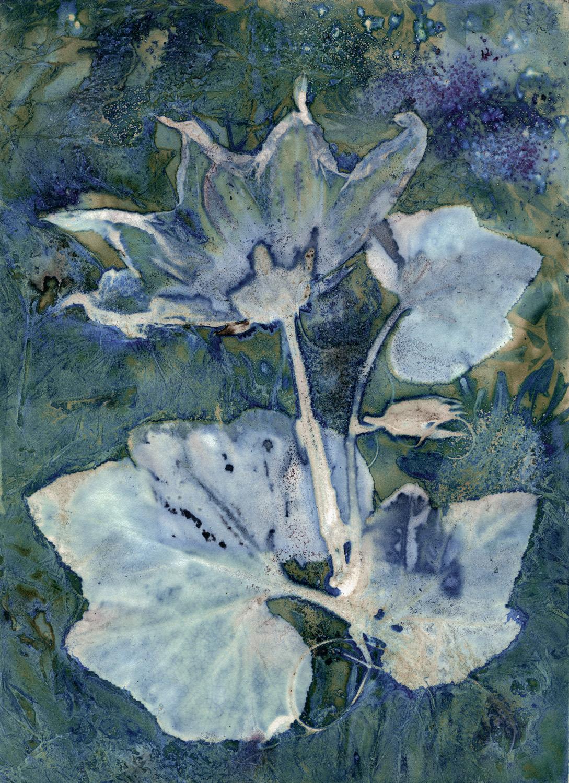 """Butternut Squash Blossom"" by Debra Small"