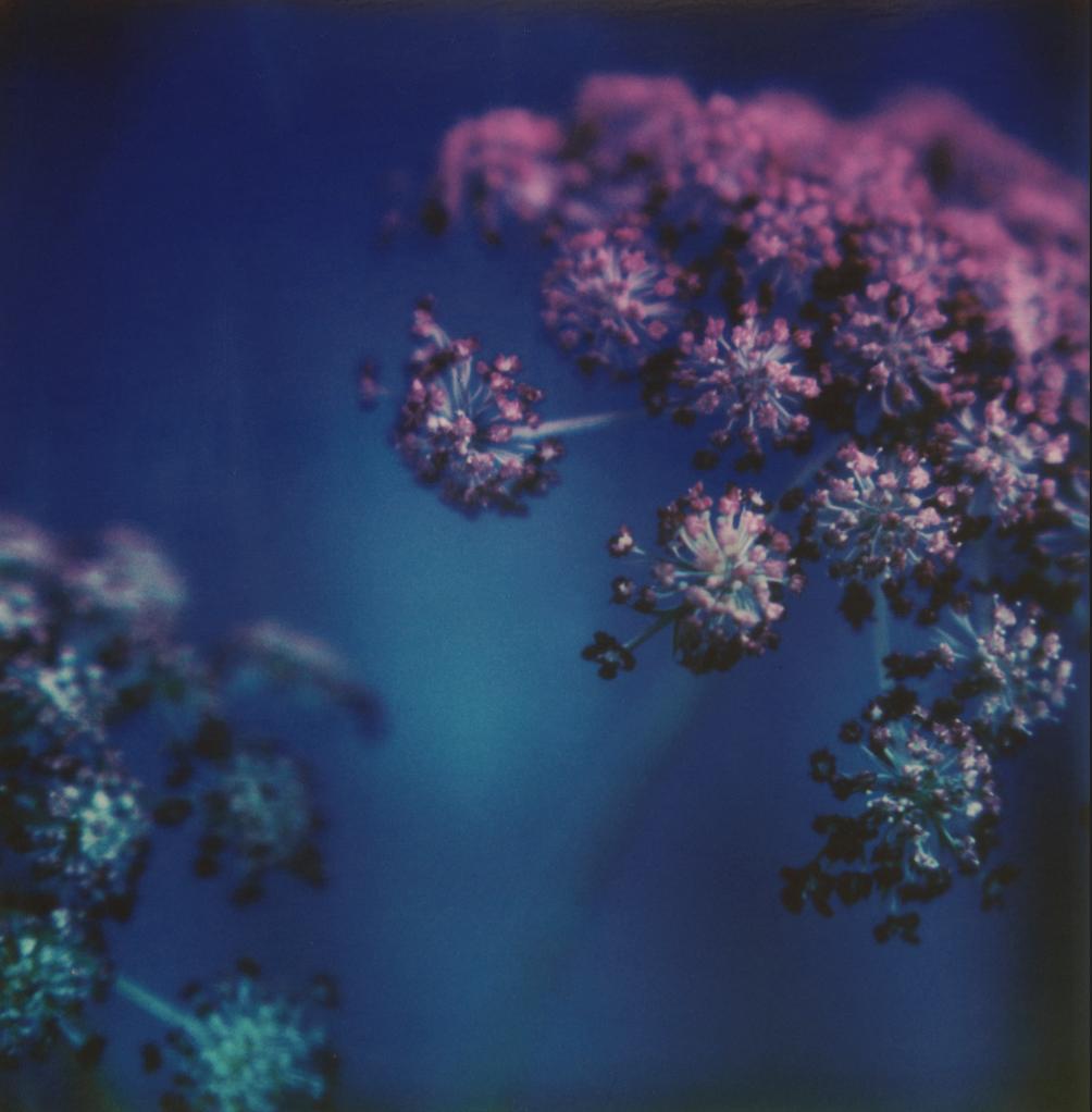 """""""Untitled"""" by Joann Edmonds"""