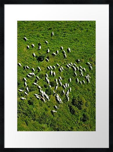 Sheeps-framed.jpg