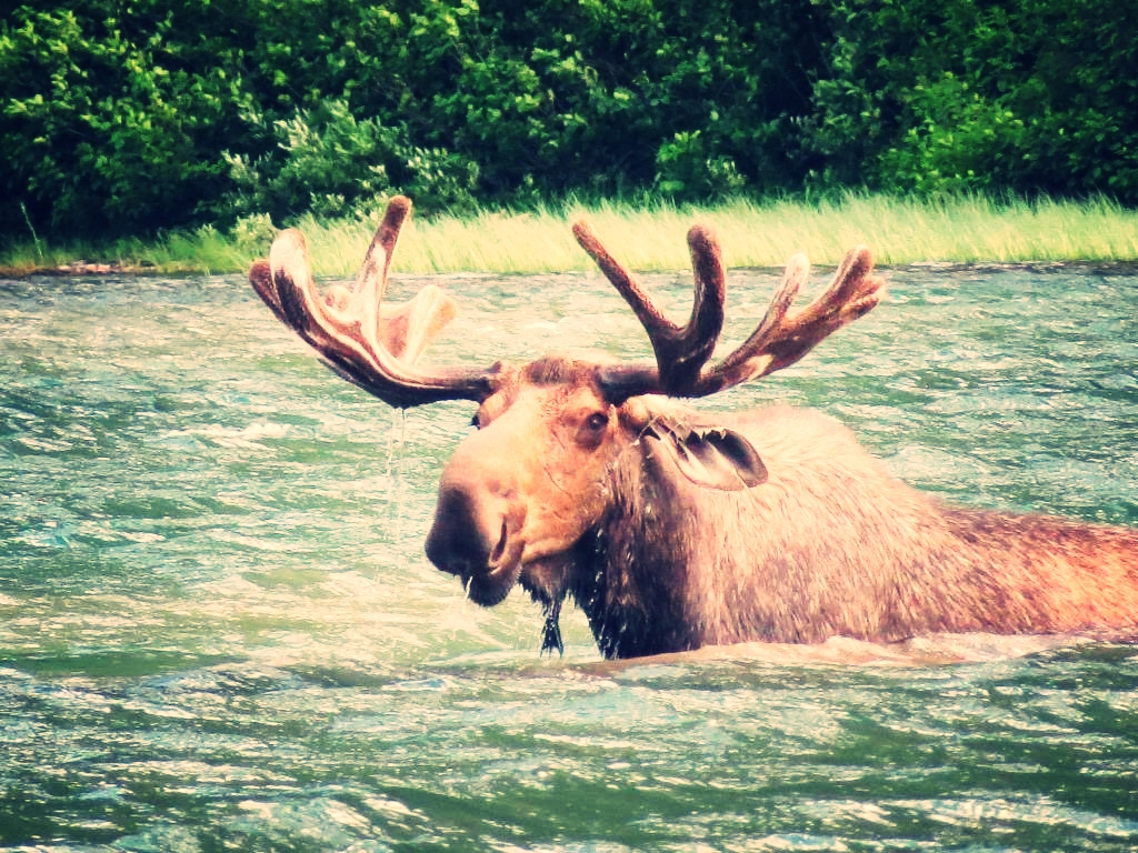 The Whole Moose:Upfront Payment In Full - Middle School Girls Trip: $2500Middle School Boys Trip: $2500High School Hybrid Trip: $2500High School Front Country Only: $1850High School Back Country Only: $1850