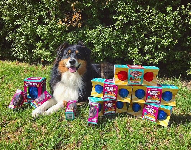 Missed out on our Easter eggs? Find them on sale at @petbarn now! 🐣