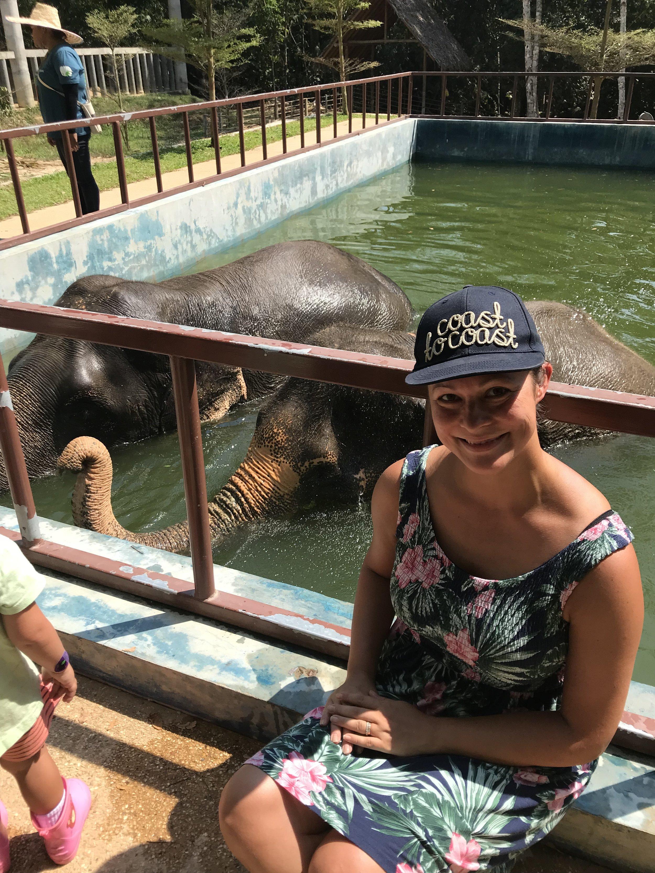 Suojelukeskuksessa pääset lähelle norsuja kuvan ottamisen ajaksi