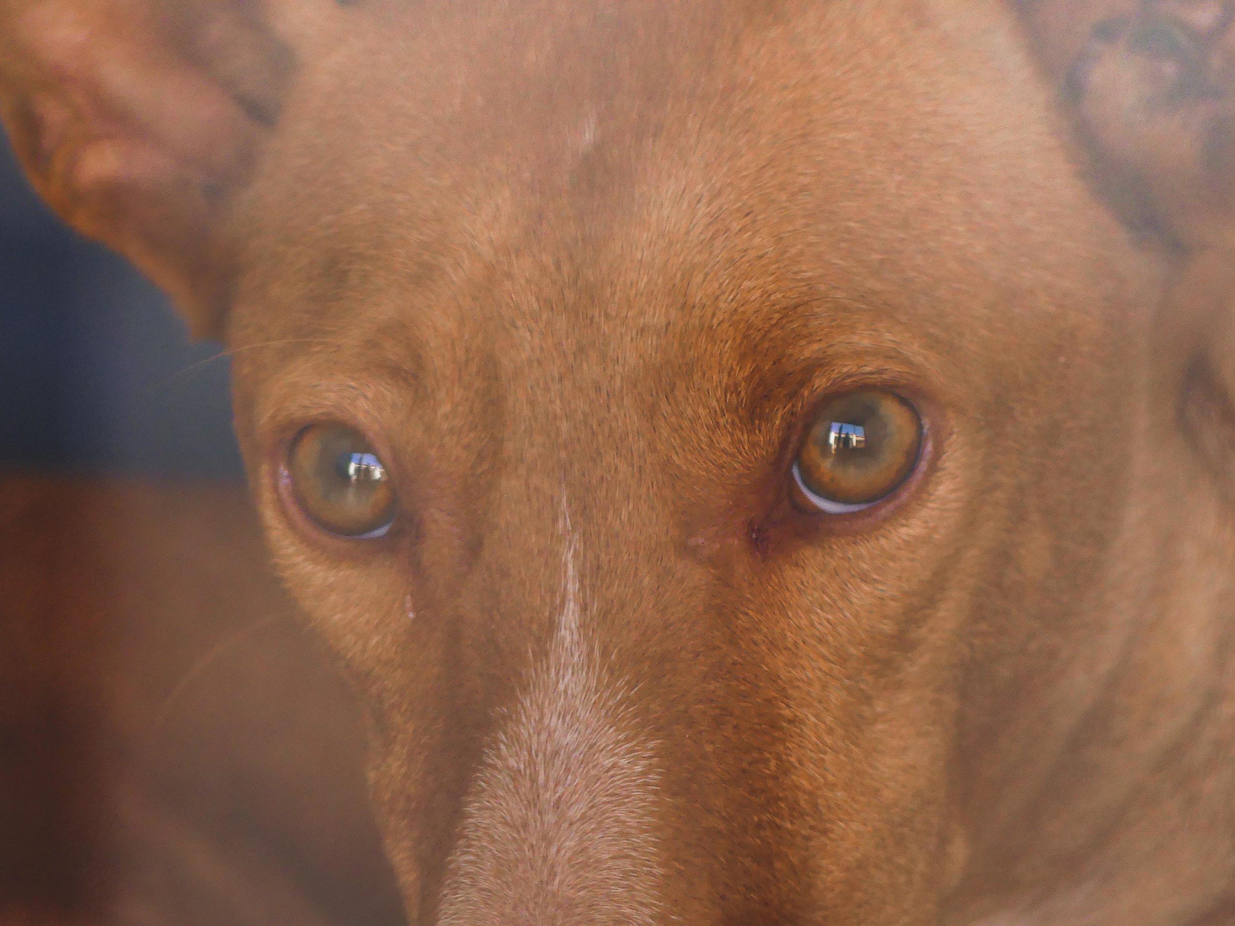 resque koira espanja.jpg