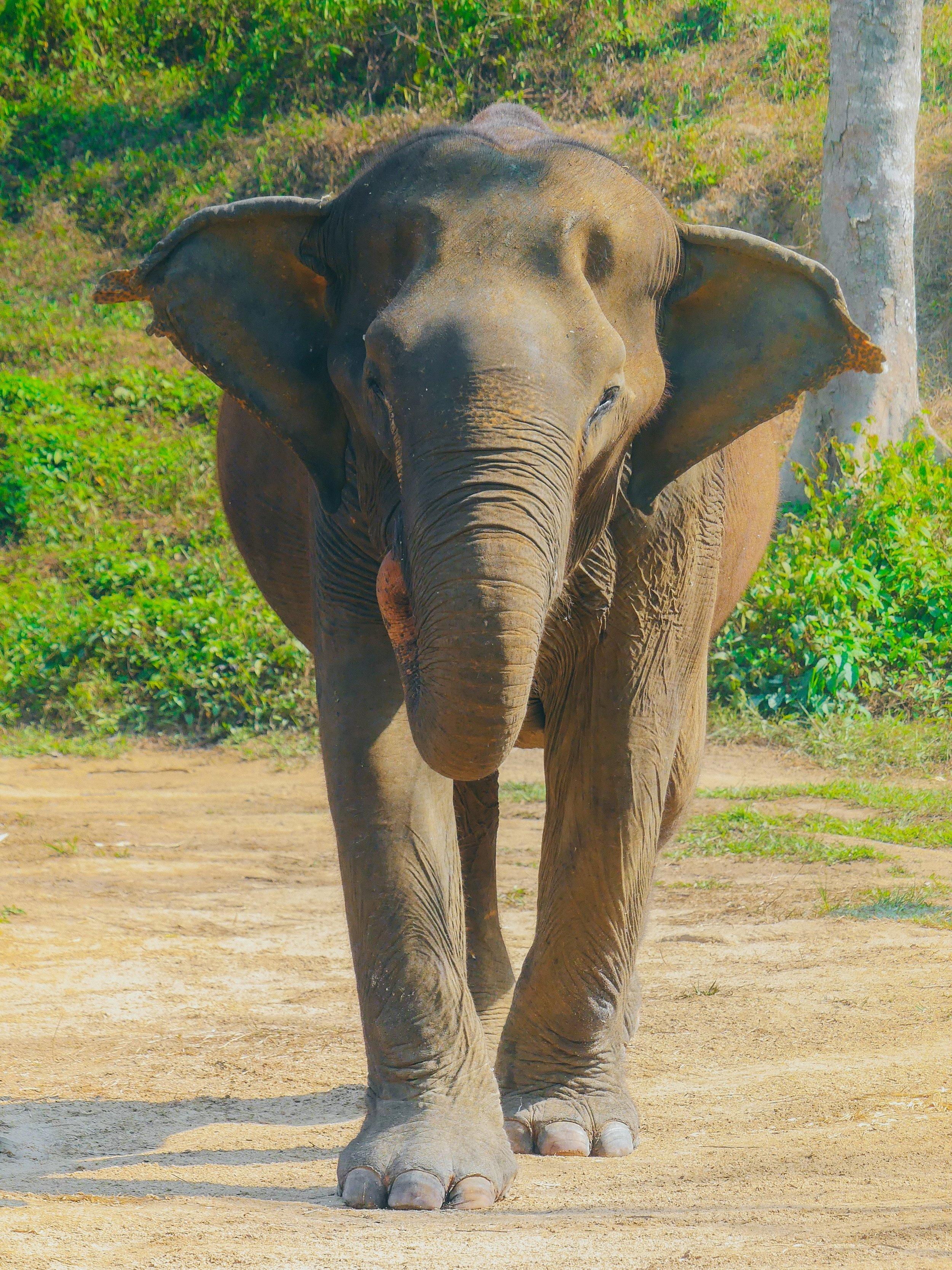 eläintensuojelu Thaimaa.jpg