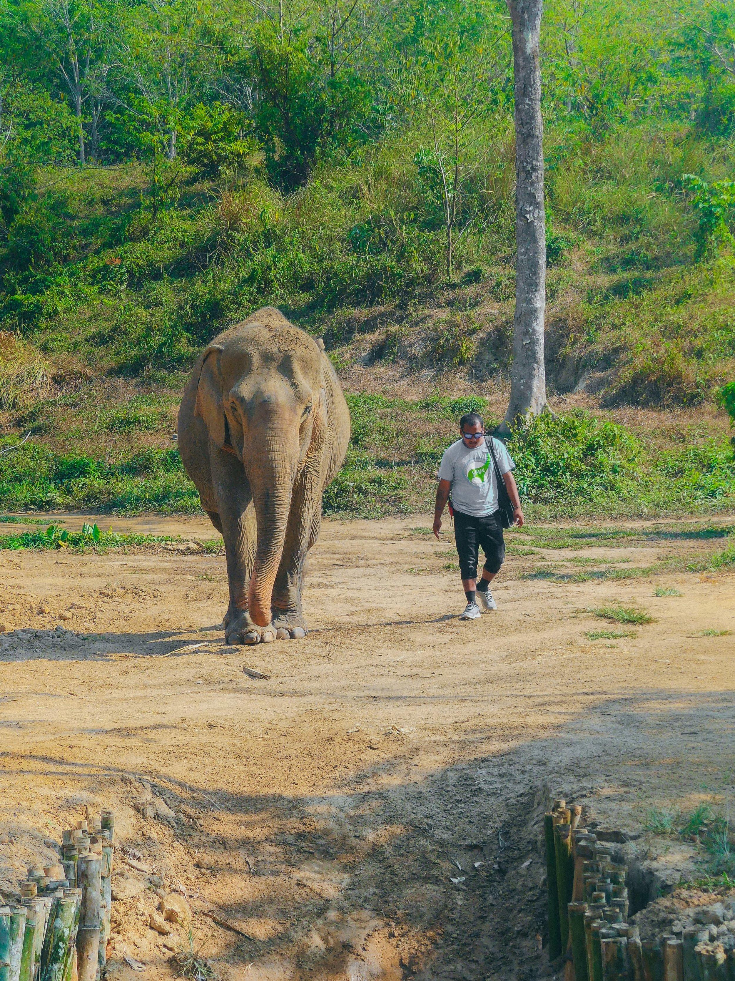mahout ja norsu.jpg