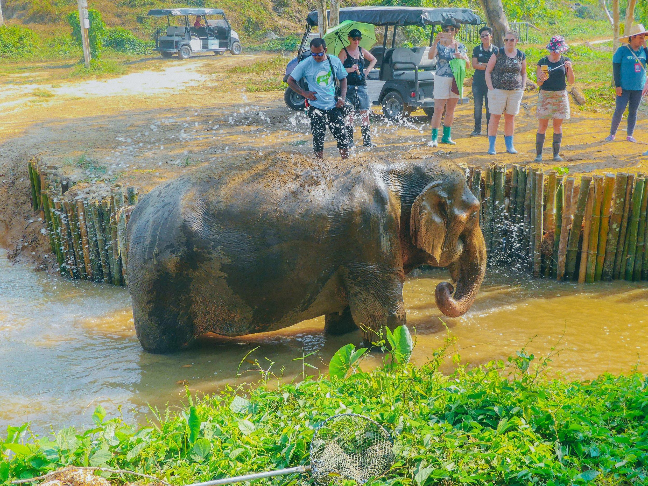 ei kylvetä norsujen kanssa.jpg