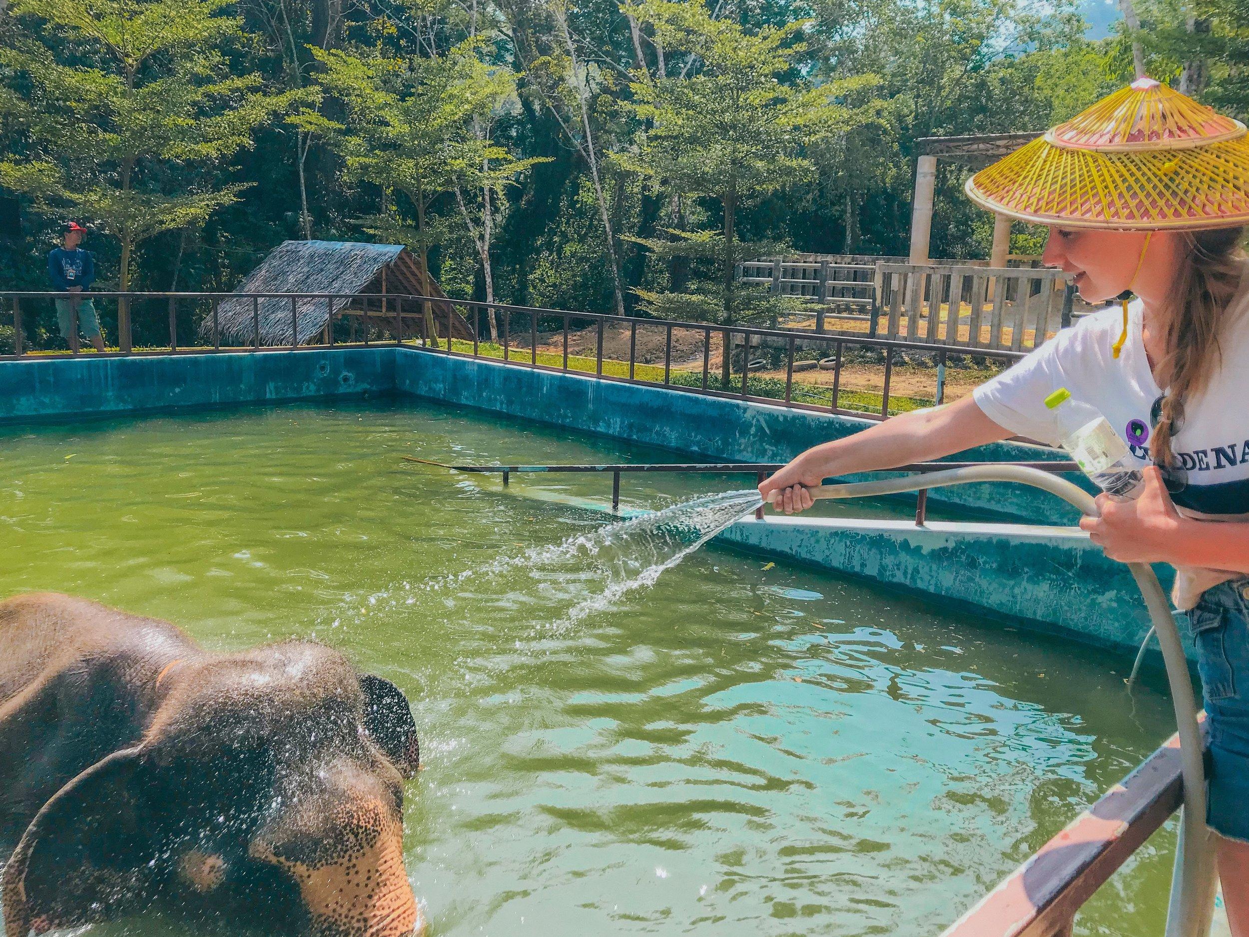 norsu thaimaa.jpg