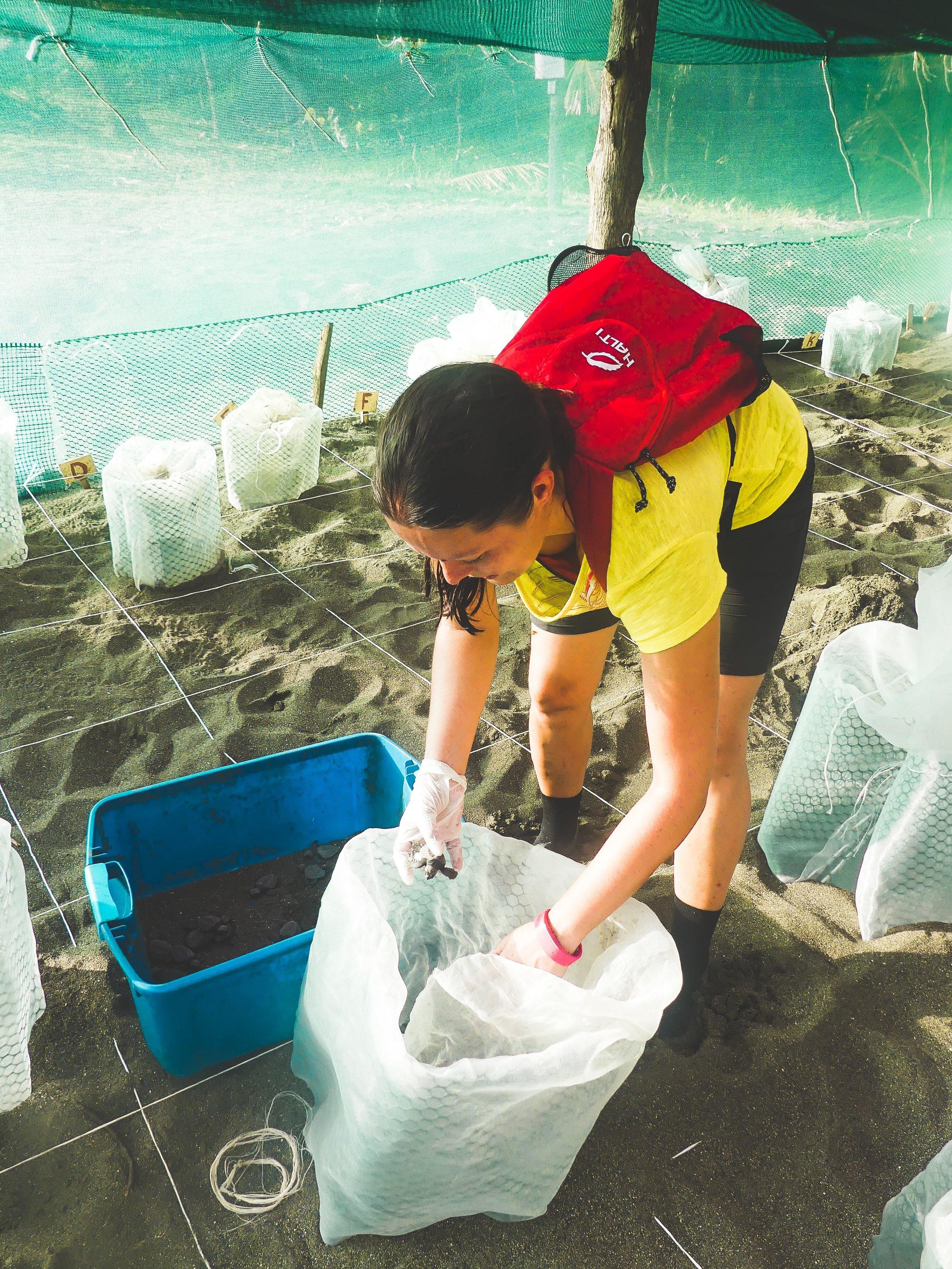 merikilpikonnien suojelu.jpg
