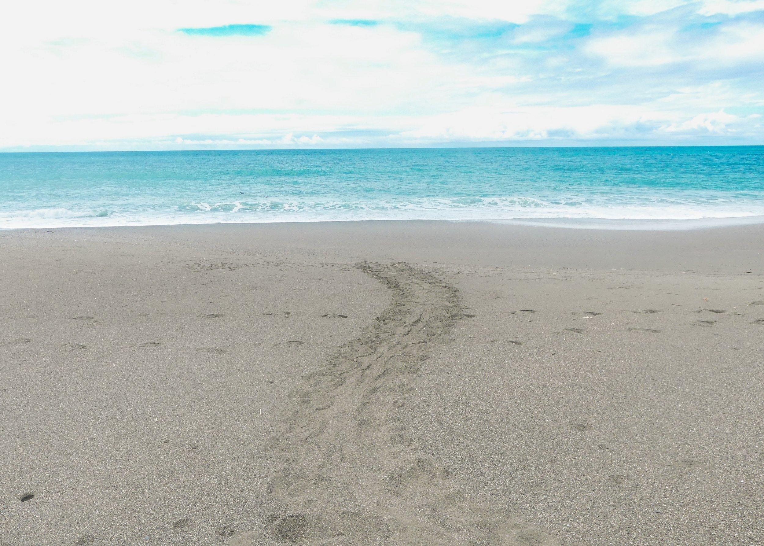 merikilpikonnan jäljet rantahiekalla.jpg