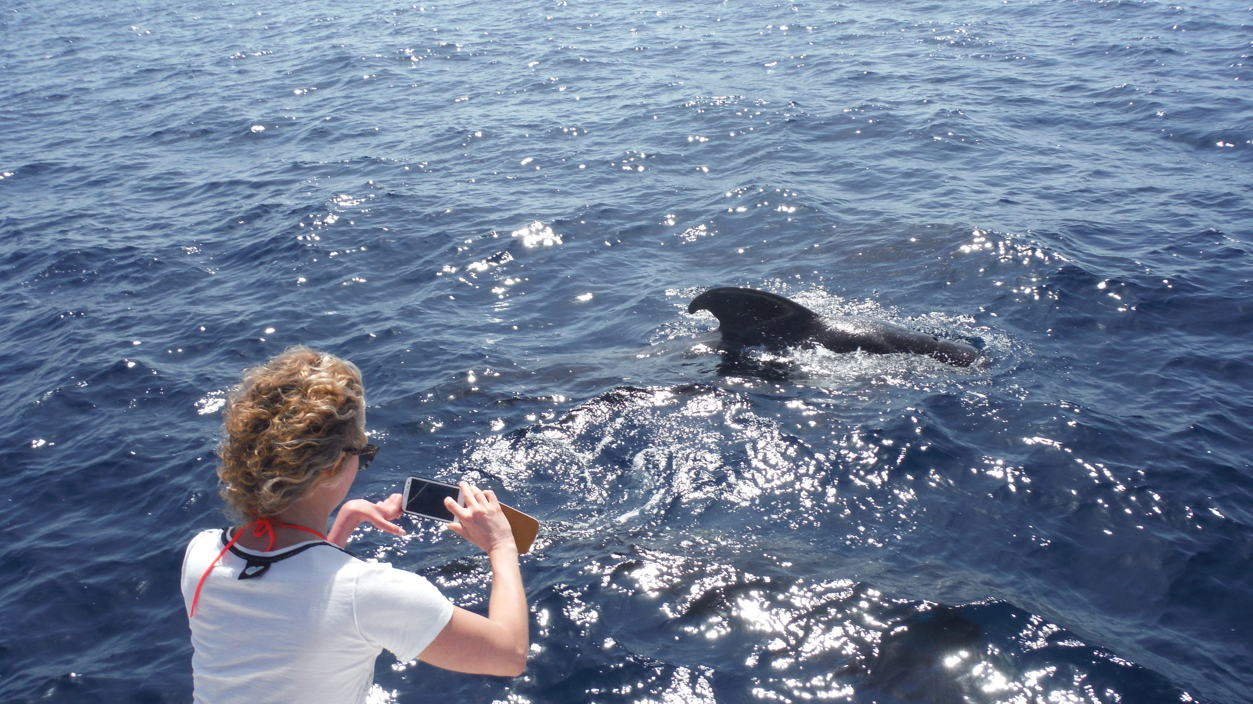 Teneriffalla vapaaehtoiset ja turistit nauttivat eläinten tarkkailusta katamaraaneilla.