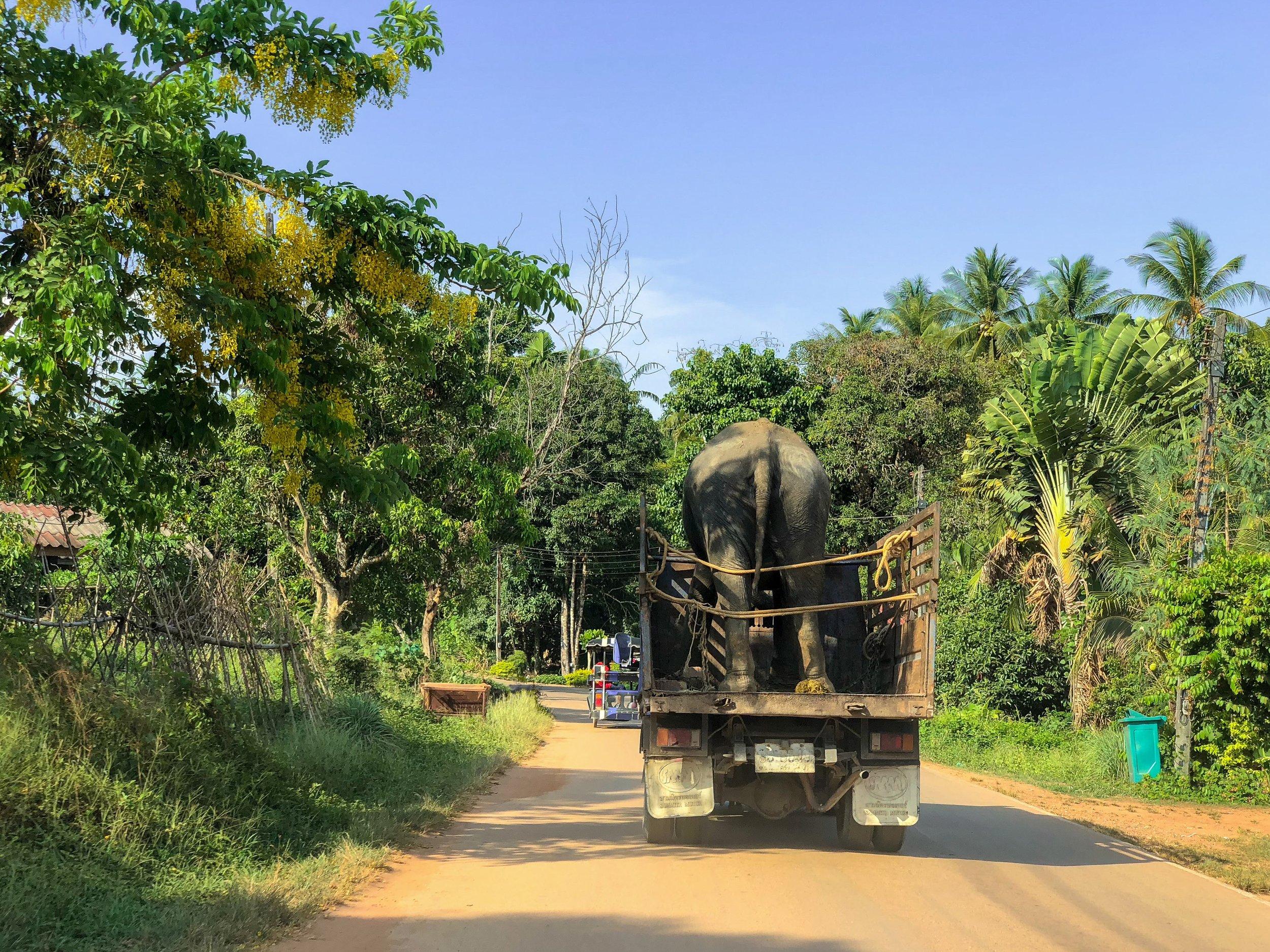 Turistien ja vapaaehtoisten ansiosta projektiorganisaatio saa rahaa, jolla pelastetaan uusia norsuja Phuketin norsujen vanhainkotiin.