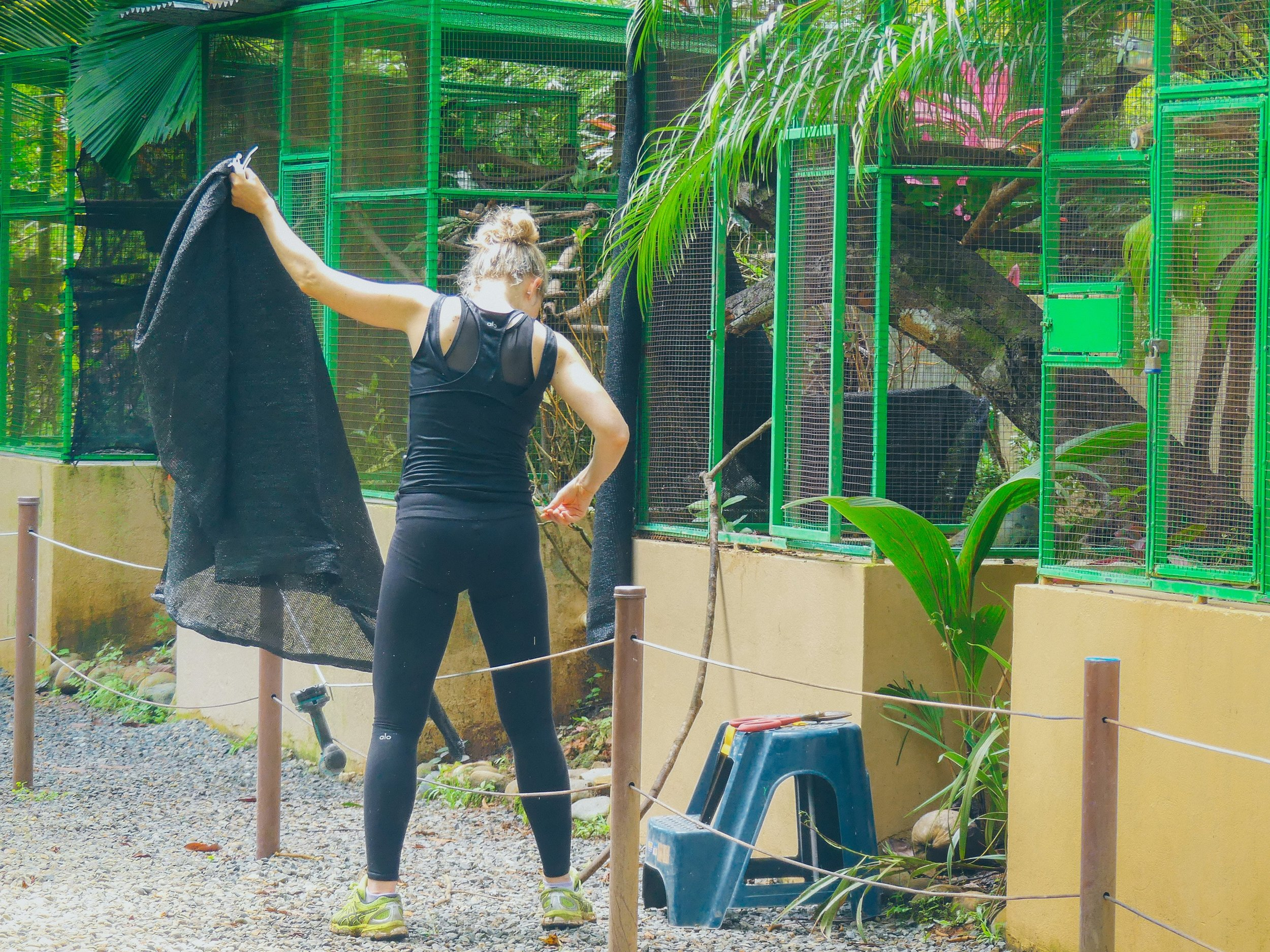 Costa Ricassa Ekomatkaajilla on kaksi merikilpikonnien suojelukohdetta sekä yksi villieläinten suojelukeskus.