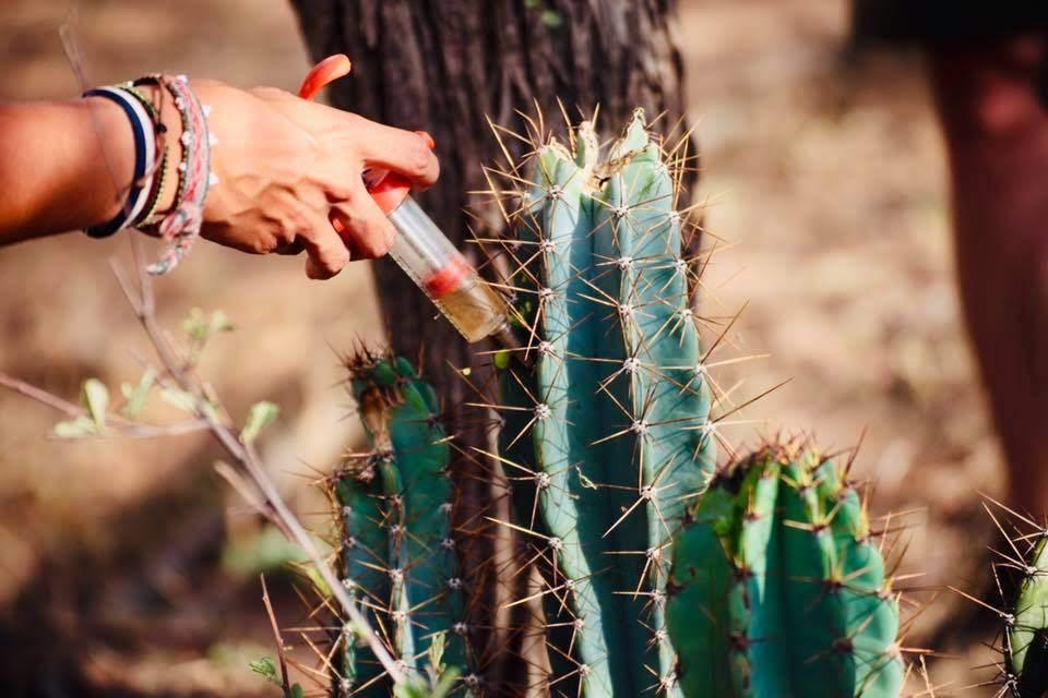 Ekomatkaajat Etelä-Afrikka vapaaehtoistyö.jpg