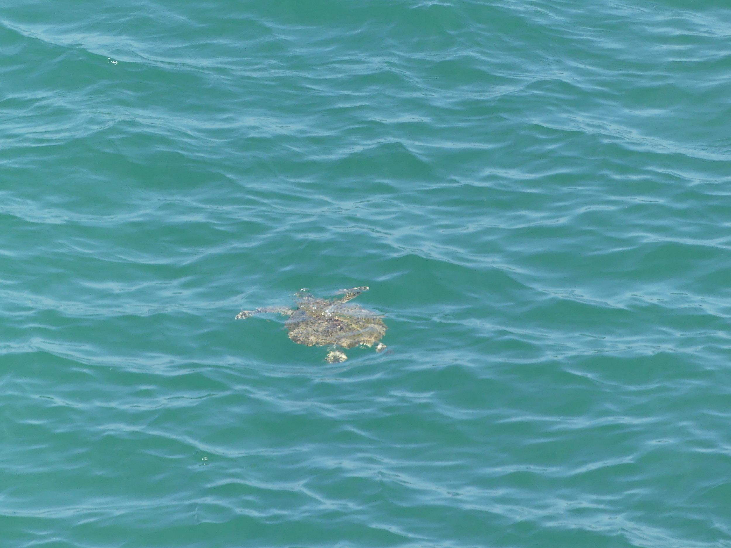 TOP 3 - Merikilpikonnien suojeluLuonnonsuojeluKohde sopii myös lapsiperheille