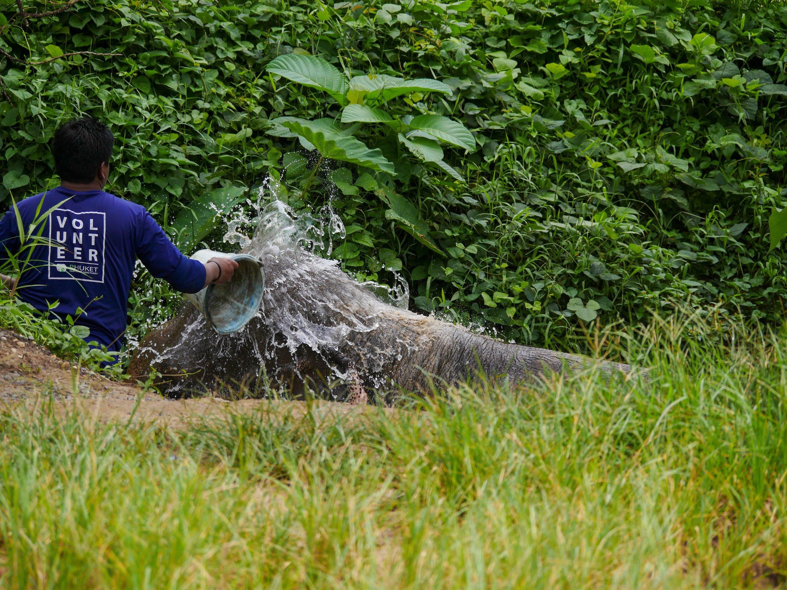 TOP 3 - Norsujen onnellisen vanhuuden turvaaminenNorsujensuojeluTyötä norsujensuojelukeskuksessa