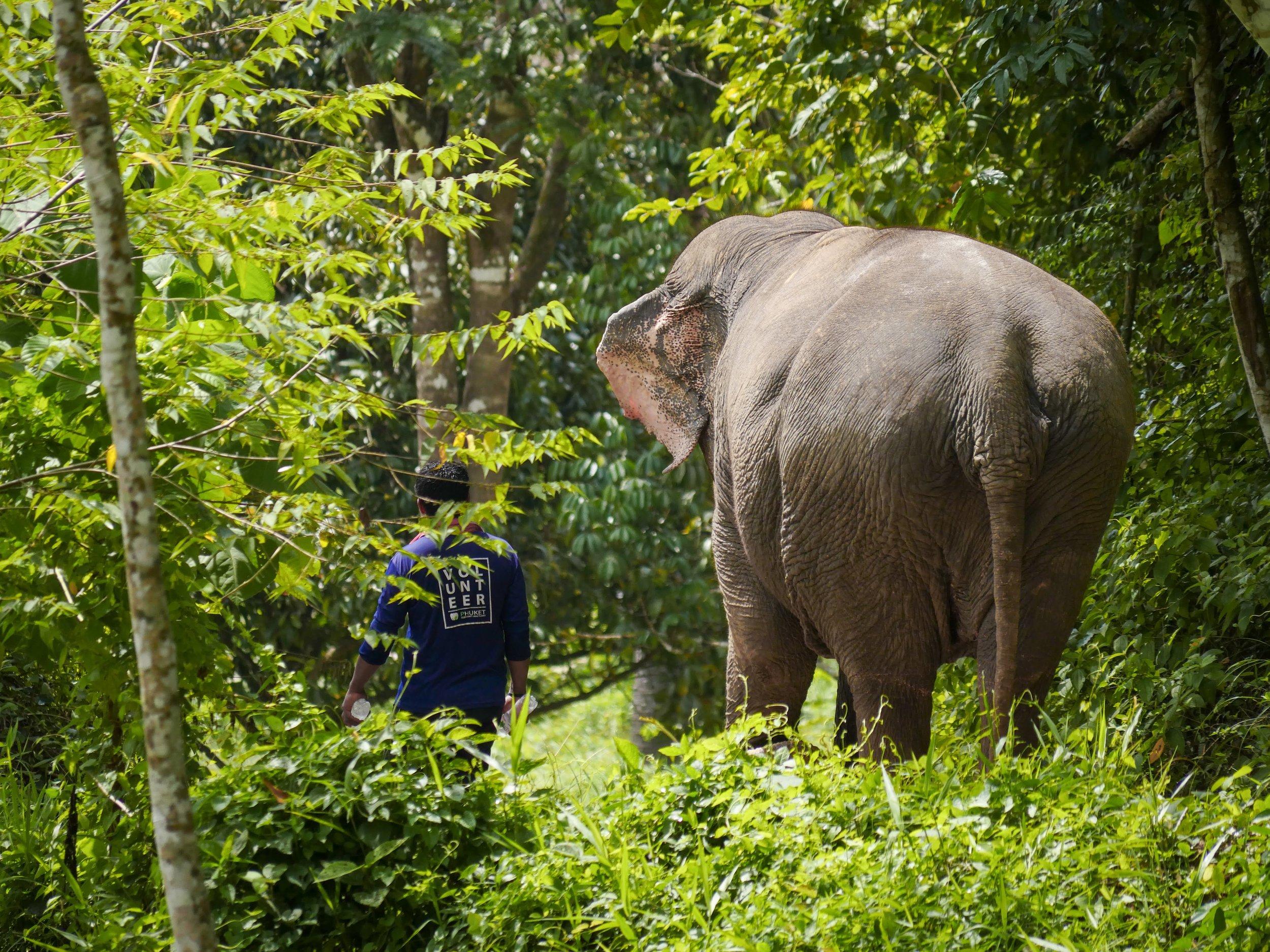 Ekomatkaajat Phuket norsut.jpg