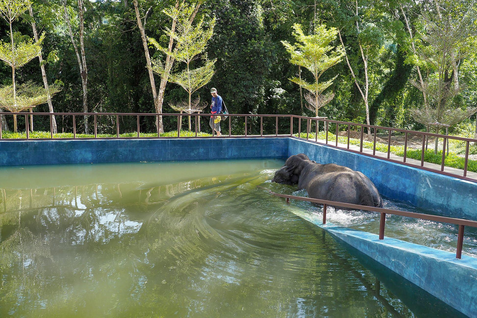 Ekomatkaajat vapaaehtoistyö Phuket.jpg