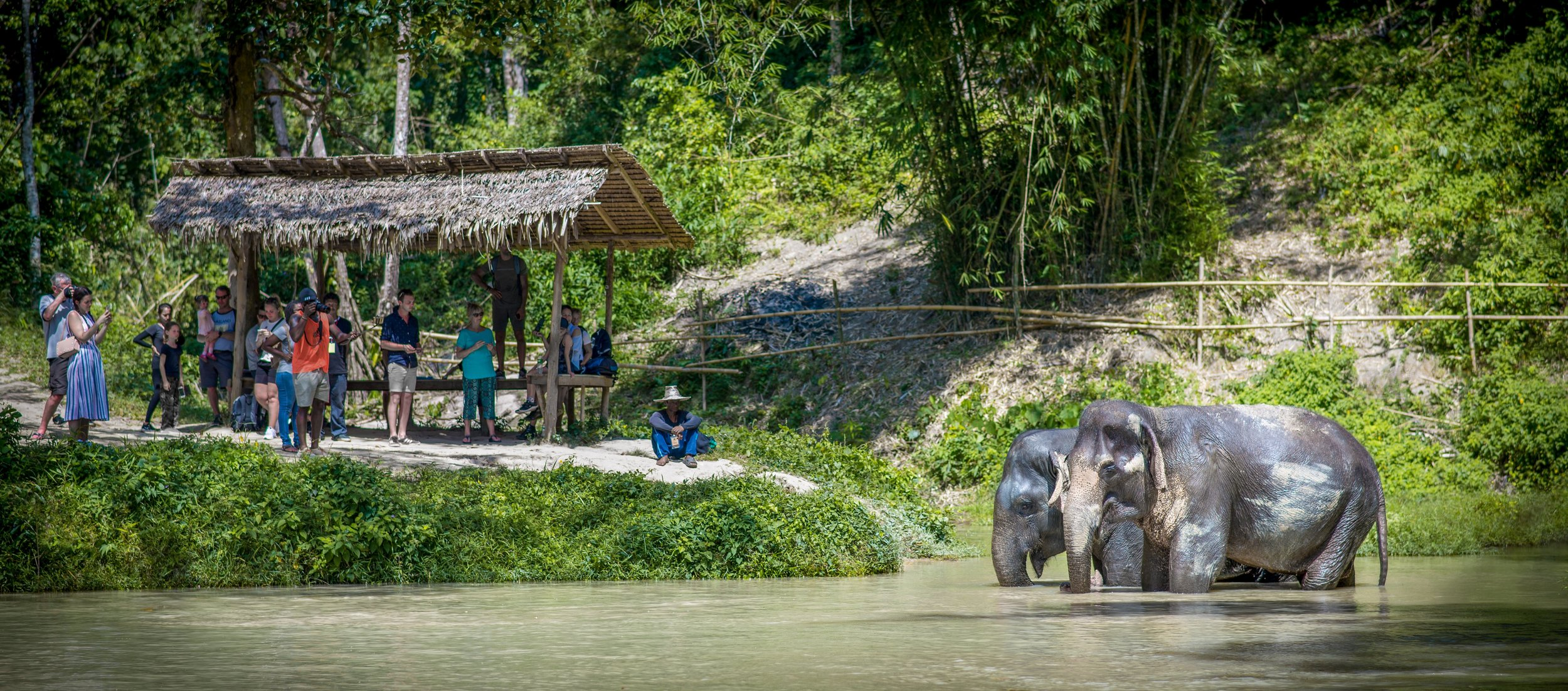 Ekomatkaajat Phuket norsujensuojelu.jpg