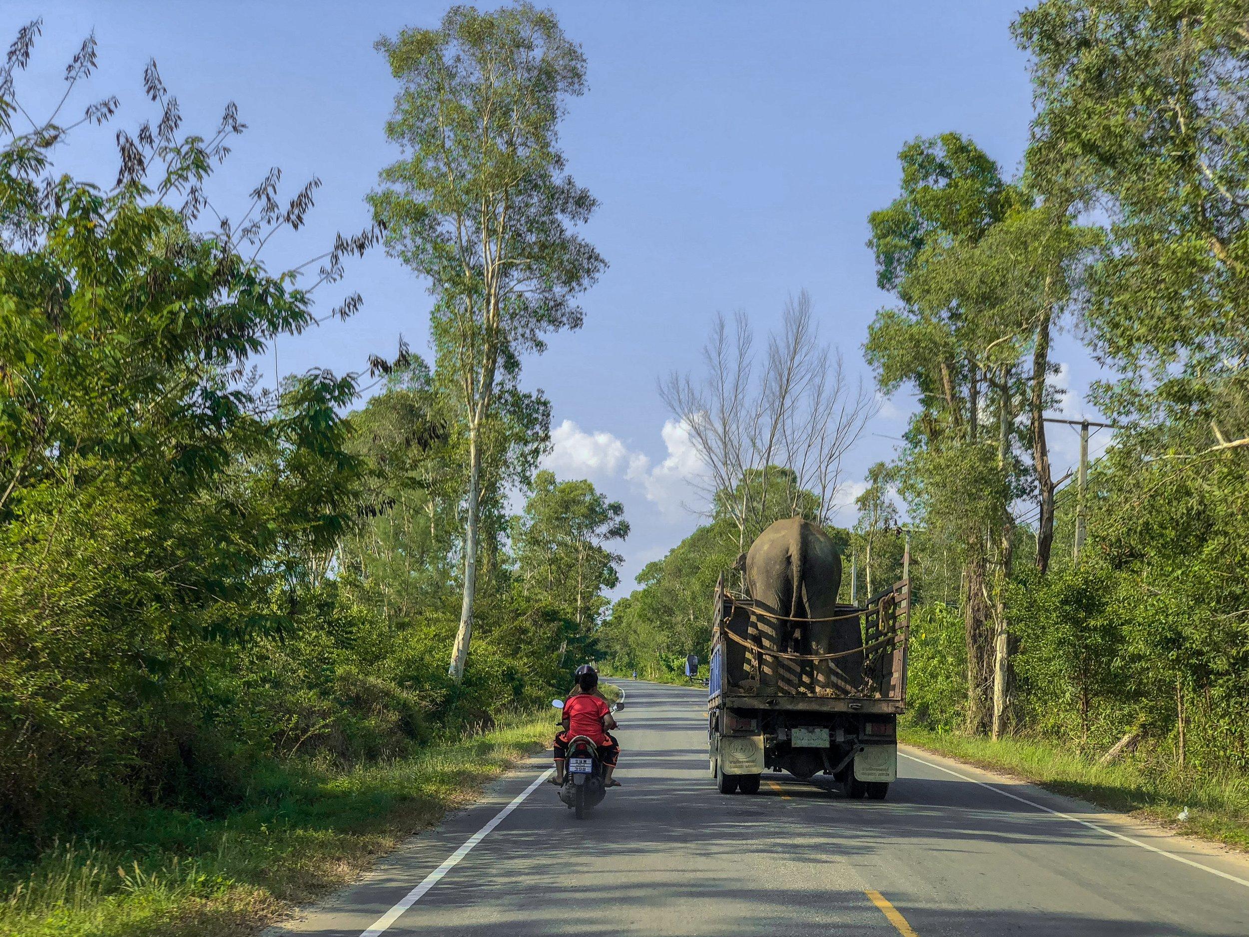Ekomatkaajat norsujen pelastaminen Thaimaa.jpg