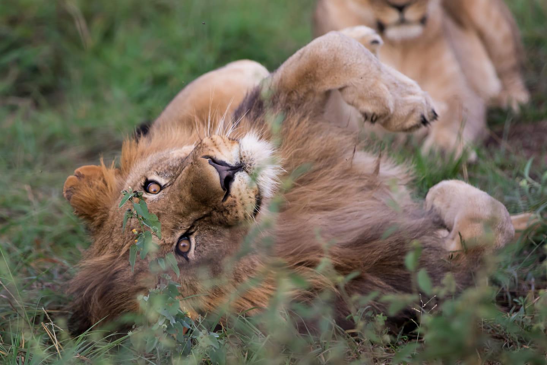TOP 3 - Uhanalaisten eläinten suojeluBig5Luonnonsuojelu
