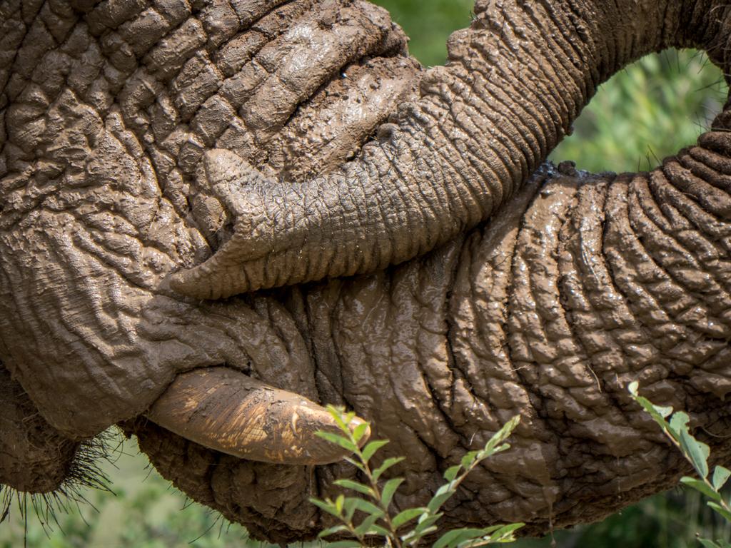 Sanat eivät riitä kuvaamaan, miten huikea reissu oli. Todellinen once in a lifetime kokemus eläinrakkaille ja luonnossa viihtyville. - Vappu