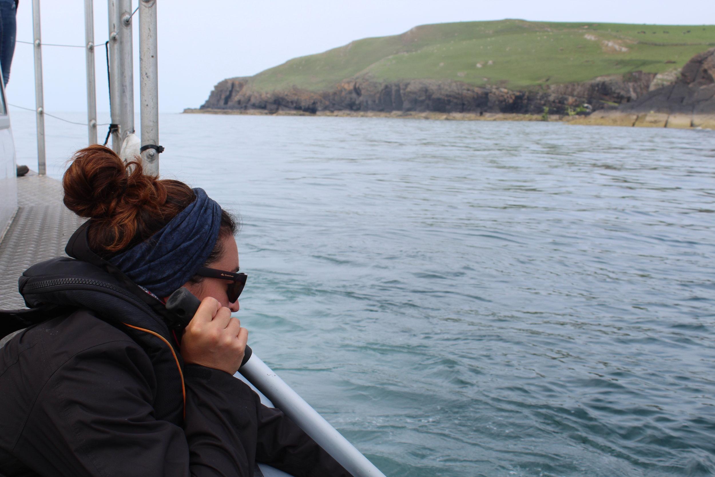 Teneriffa delfiinien tutkimus.JPG