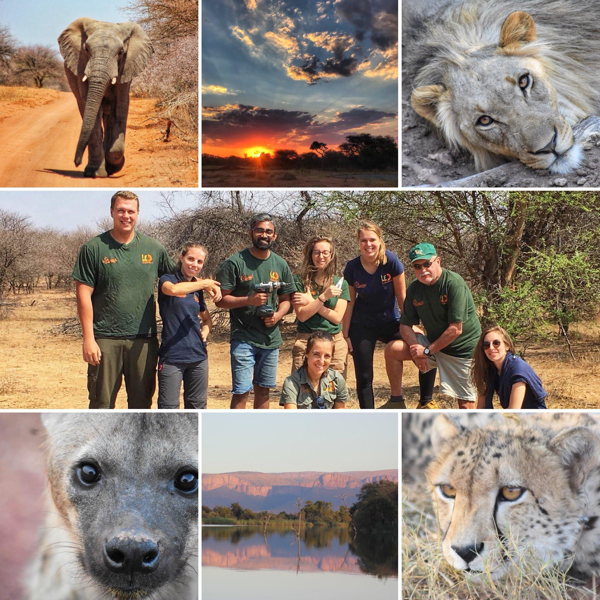 Etelä-Afrikassa pääset auttamaan norsuja, leijonia, kirahveja ja muita isoja kansallispuiston eläimiä.