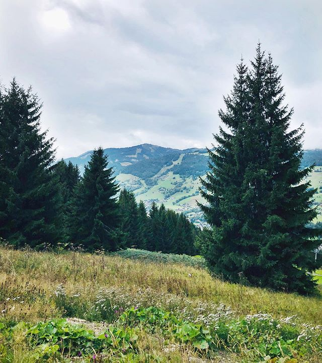 Afternoon walks in Megève🌲 Spot the dog... • • • • #megeve #walks #mountains #thealps #exercise #cockerspaniel #summer #winteriscoming #cloudy