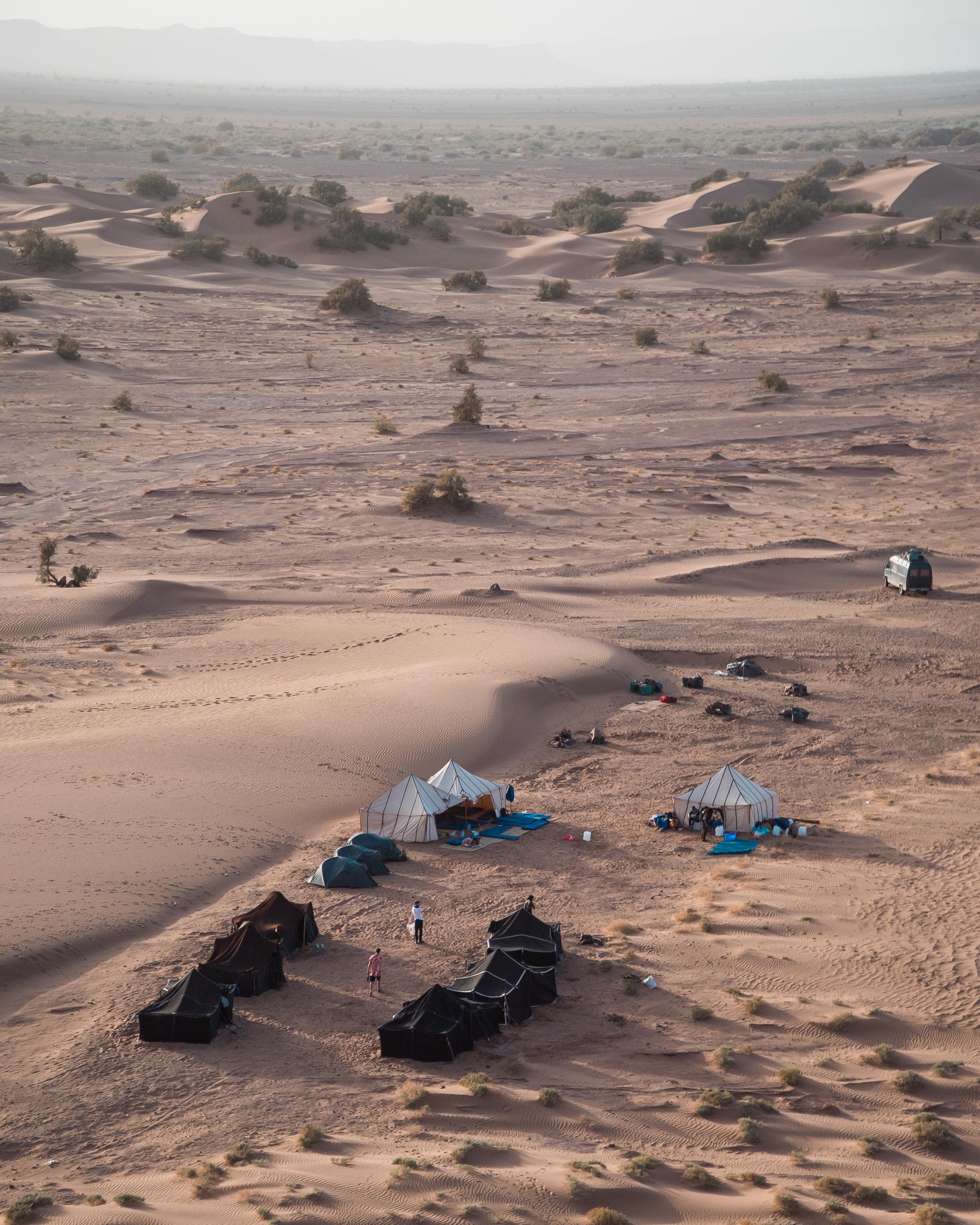 Sahara Desert - Life in the desert