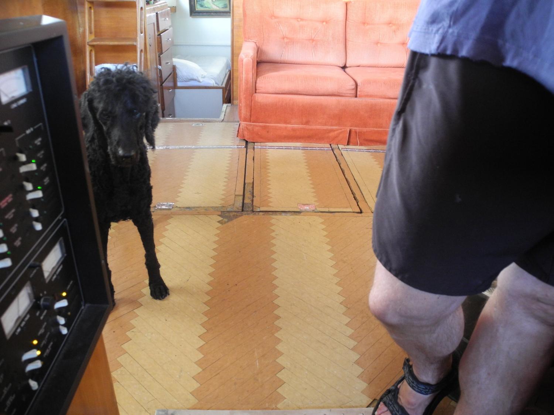 Kohl on old herringbone floor.