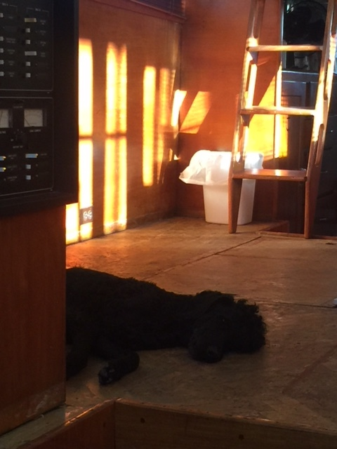 Kohl after a hard day ripping up the old herringbone floor.