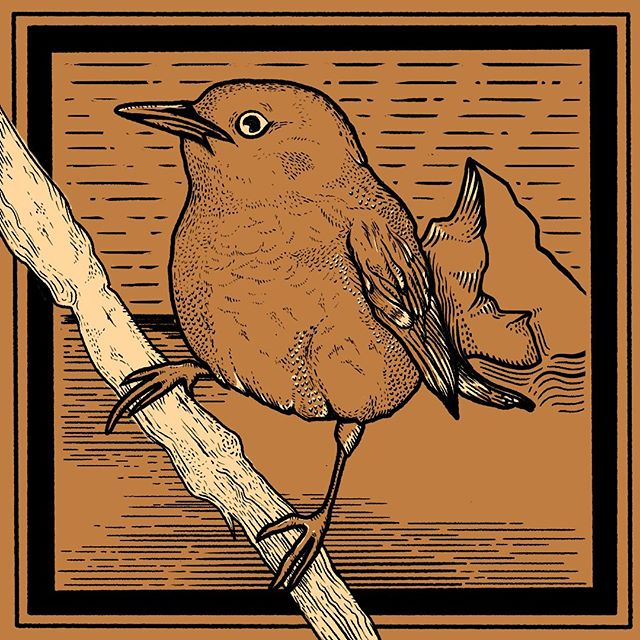 Been slacking on putting out new work. Here's a plump little Warbler bird! . . . . #illustration #illustration #warbler  #procreate #birds #bird #chonky #graphicdesign