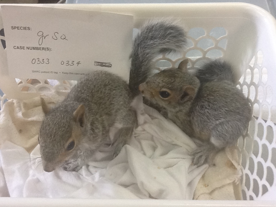 baby squirrels.JPG
