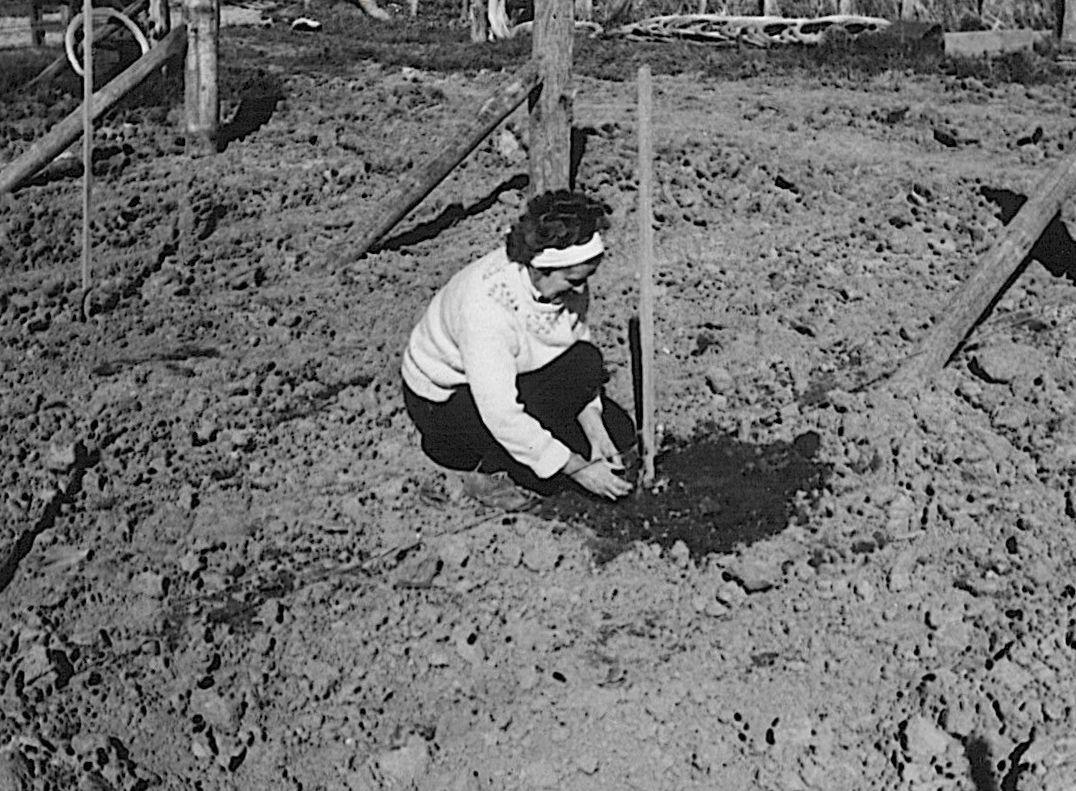 The Millton Vineyards & Winery Est. 1984 - New Zealands first Organic & Biodynamic wine estate.