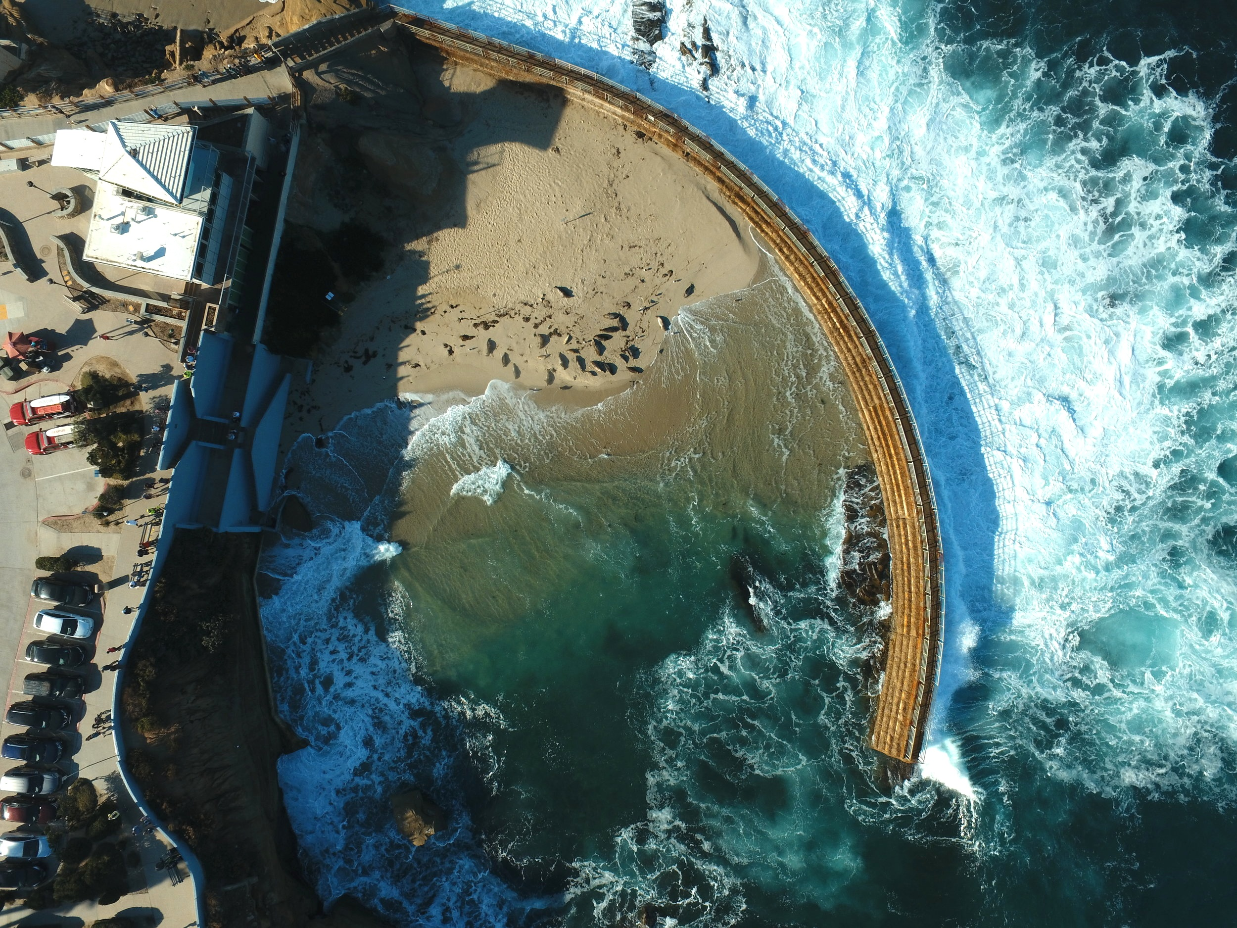 Aerial view of marine mammals on beach