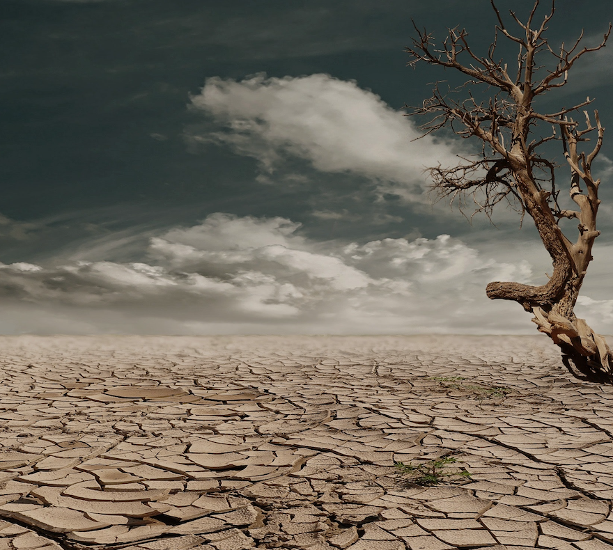 desert tree depression.png