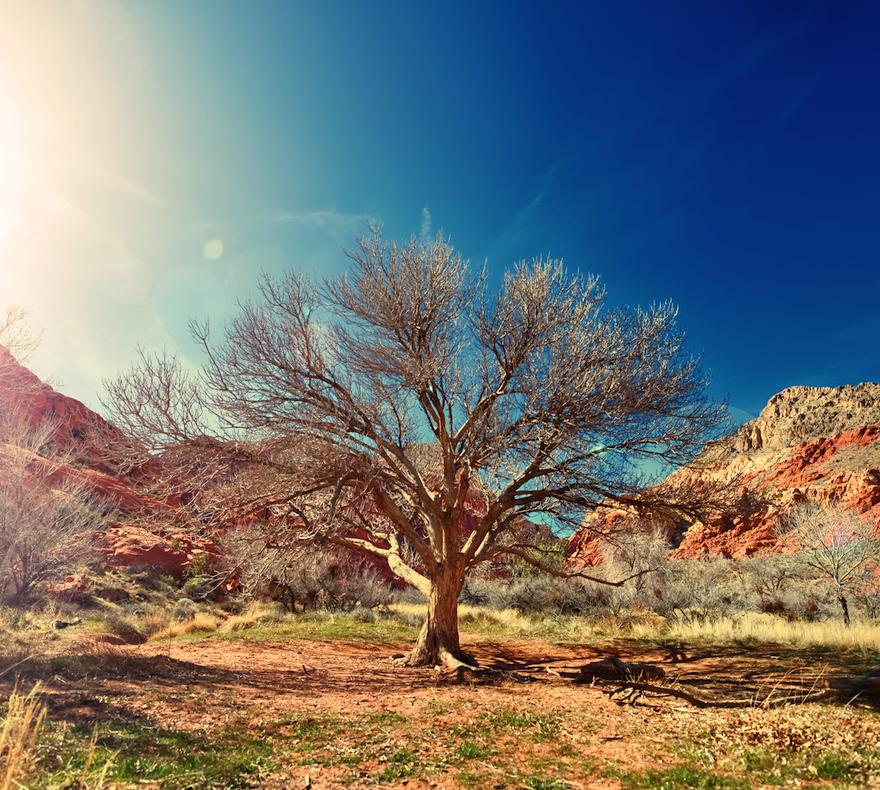 desert tree non-trad.png