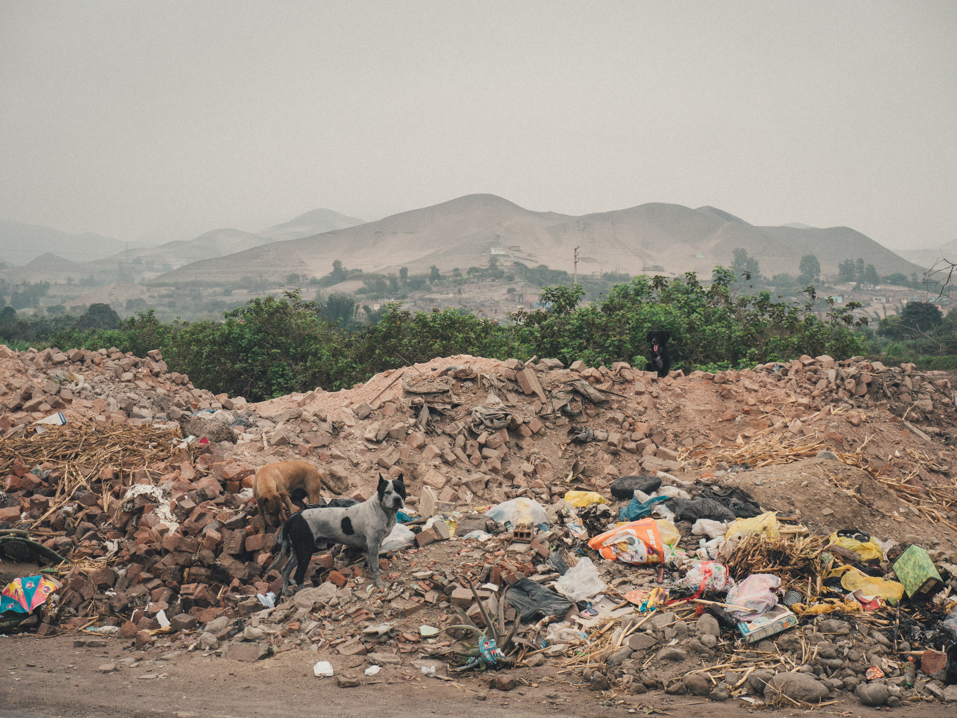 A common sight along the Pan-american Highway in Peru: trash and straydogs.