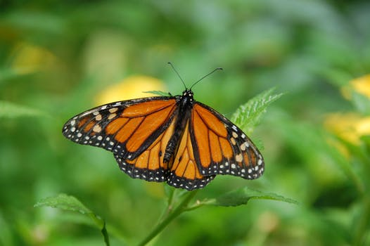 gran-canaria-spain-island-butterfly-67544.jpeg