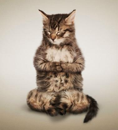 meditatingcat.jpg