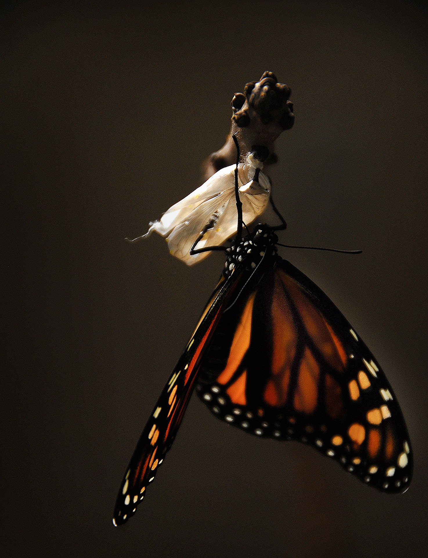 butterfly-1518060_1920.jpg