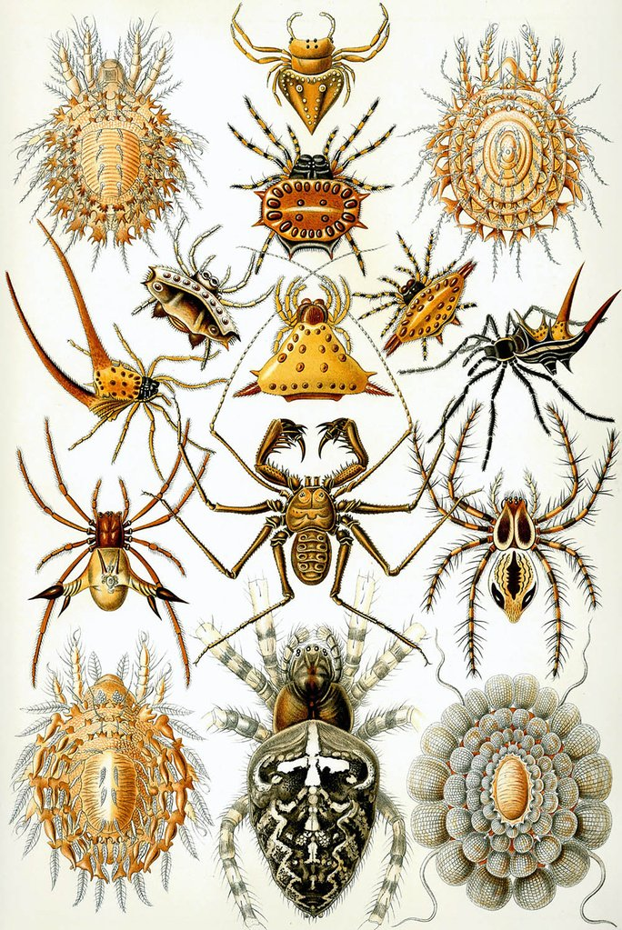 arachnida.jpg