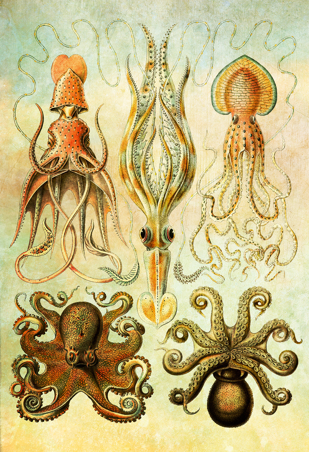 ernst-haeckel-gamochonia-print-octopus-and-squid-art-vintage-nautical-decor-ocean-wall-art-giclee-print-on-canvas-satin-5817b2bf4.jpg