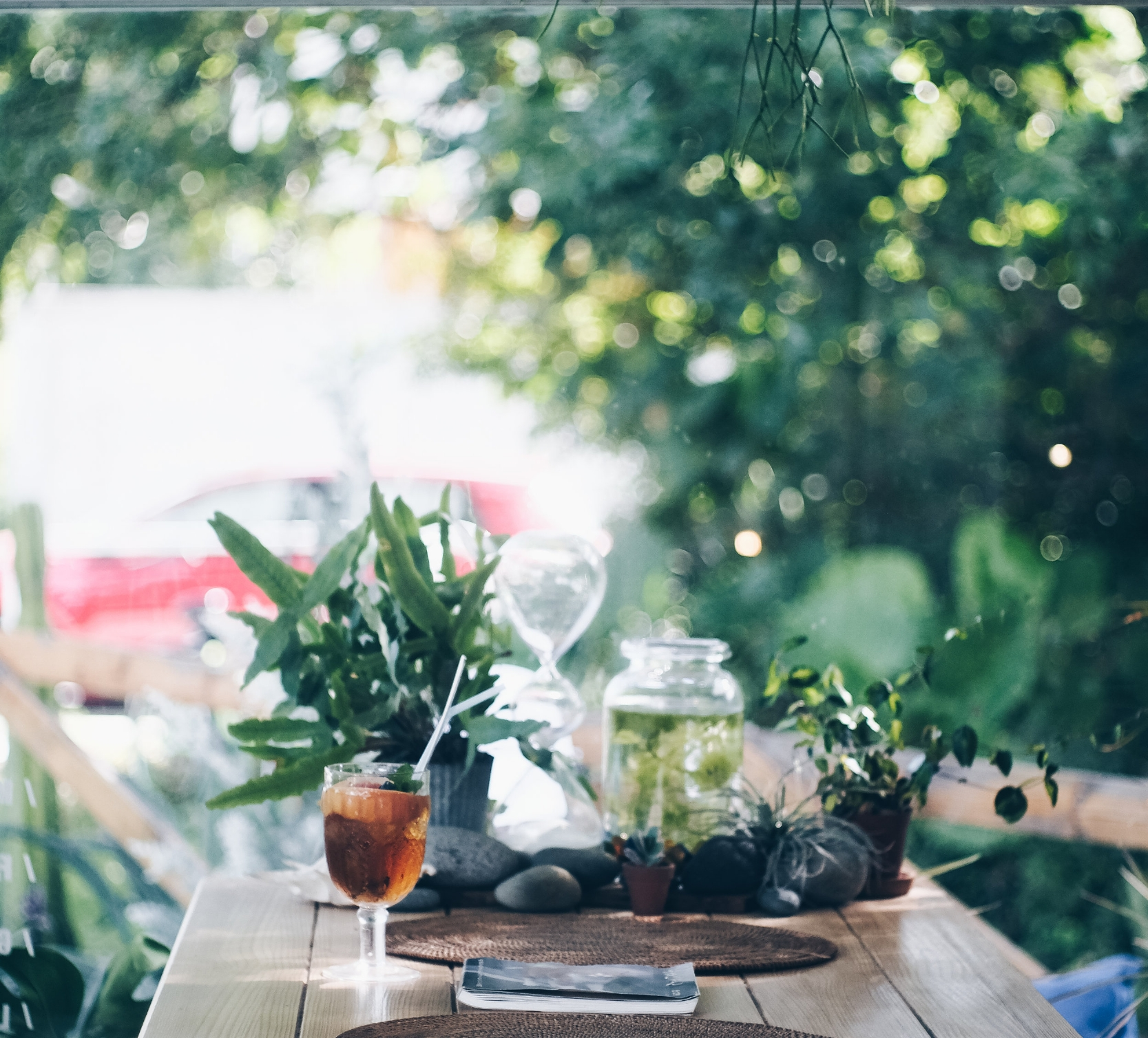 . - MR CARDIGAN'S PLANT HOUSE